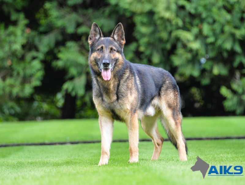 Absolute Dogs Training Academy