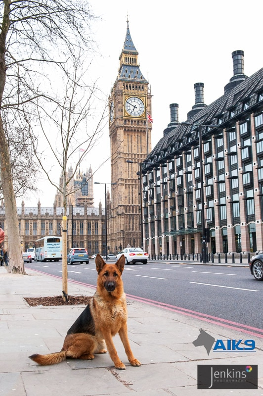 A1K9-Bella-and-Big-Ben