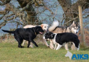 A1K9 Dog Obedience Training classes