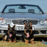A1K9s Protection Dog Cyrus and Zira
