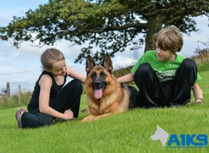 A1K9 Family Protection Dog (10)