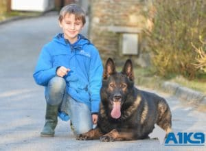 A1K9 Family Protection Dog (4)