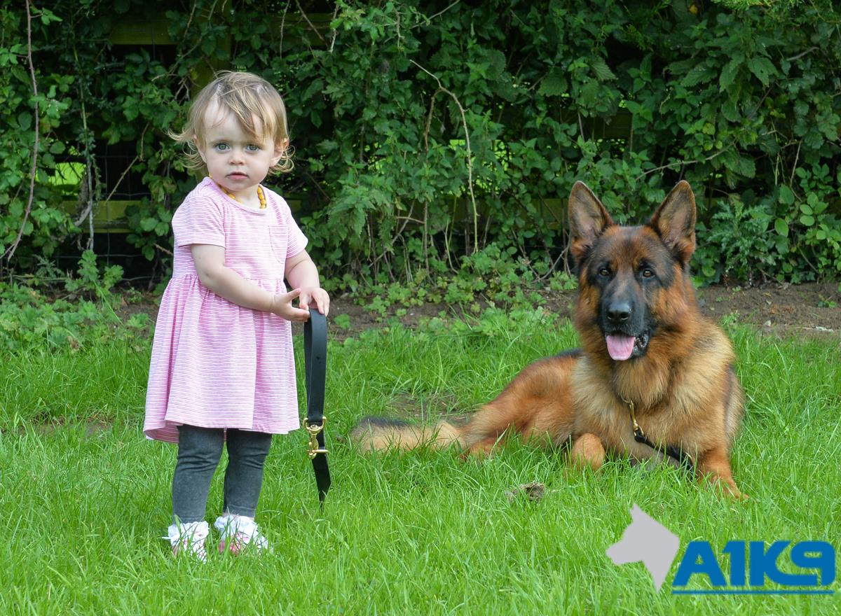 A1K9 Family Protection Dog (6)