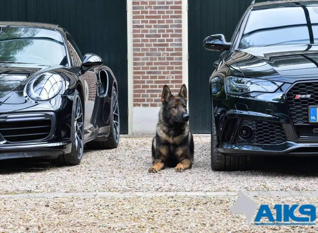 Family Amp Personal Protection Dogs Trained For Sale A1k9 174