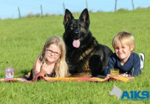 A1K9 Family Protection Dog with kids-img
