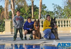 A1K9 Family Protection Dogs with children img