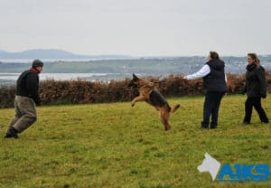 A1K9 Personal Protection Dogs Refresher Training img