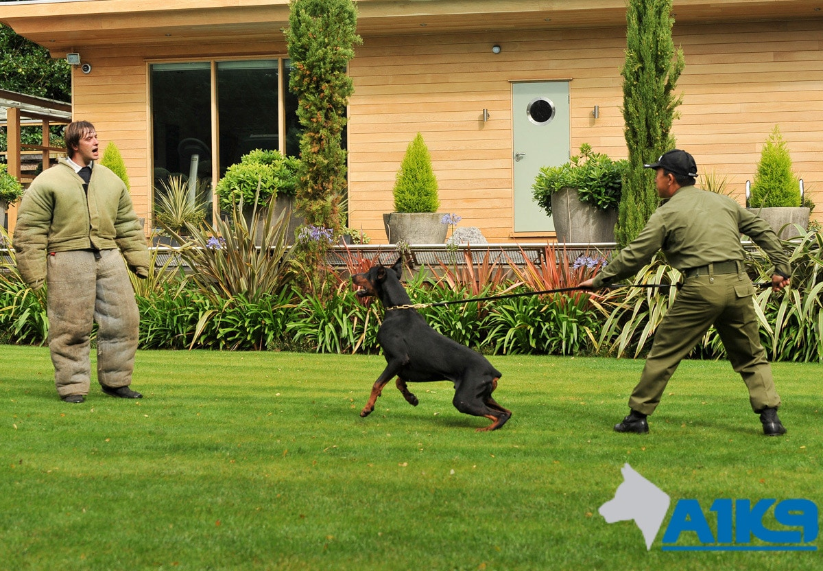A1K9 Security Handler Training