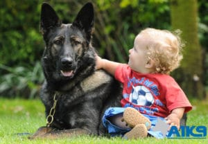 A1K9 The finest family protection dogs