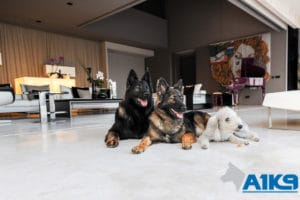 A1K9s Protection Dogs