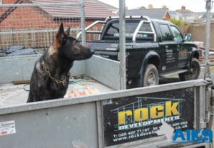 A1K9 Dog on the Back of a Trailer