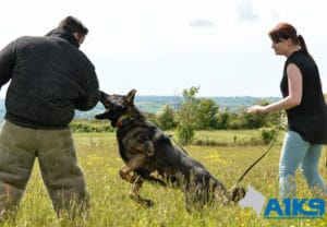 A1K9 family protection dog deals with assailant