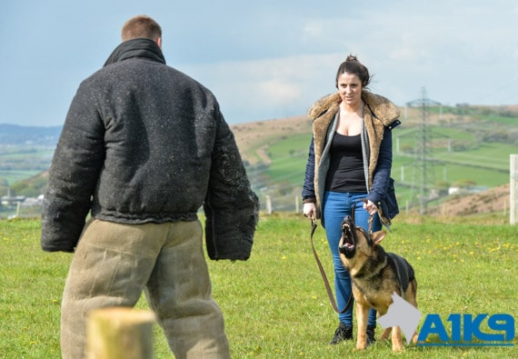 A1K9 Family Protection Dog Deters Assailant