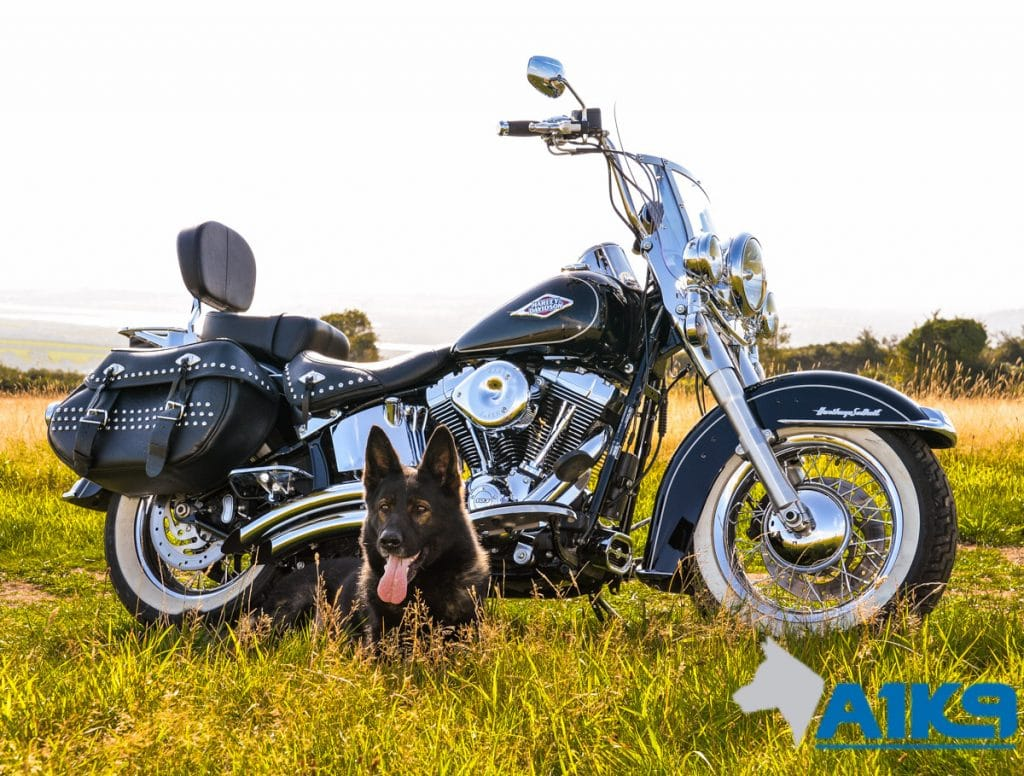 A1K9-family-protection-dog-wagary-harleydavidson-2945