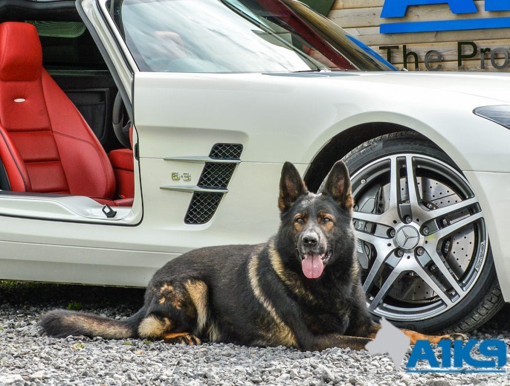 A1K9-family-protection-dog-wagary-sls63-amg-5844