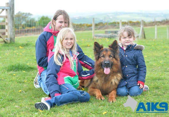 A1K9 family protection dog with kids Q11
