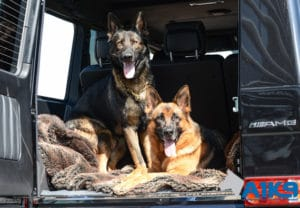 A1K9 family protection dogs Amg Mercedes