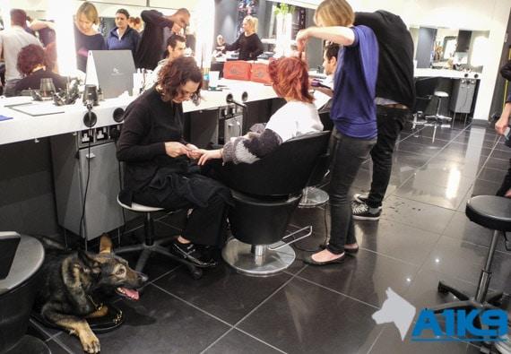 A1K9 Dog at Hairdressers