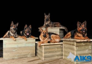 A1K9 family protection multdogsi Q1