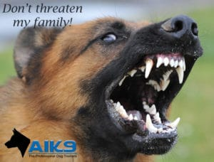 A1K9s Protection Dog