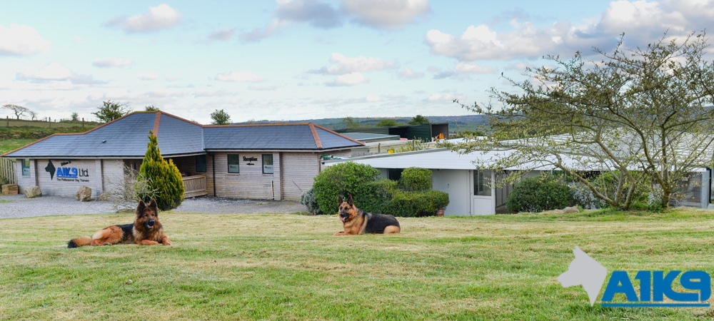 Protection Dog Training Facilities