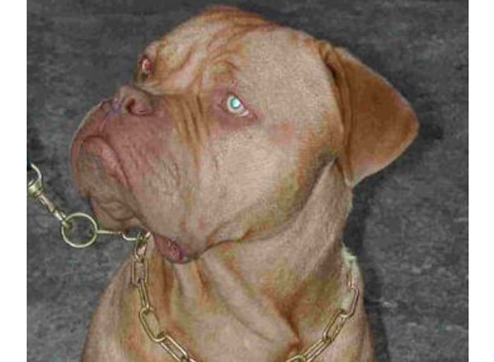 Trained Family Protection Dog (Sold) - Buster