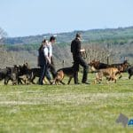 A1K9s Protection Dog Group Walk