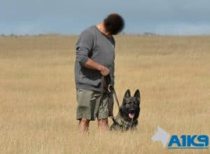 A1K9 Personal Protection Dog With Client