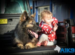 A1K9 Family Protection Dog Harry with Baby