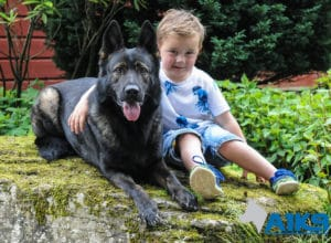 A1K9 Family Protection Dog Childs Friend