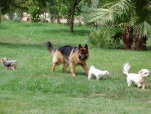 Arro Personal Protection dog