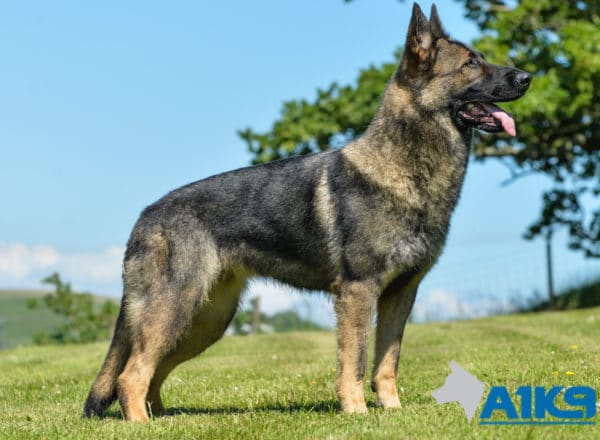 A1K9 Family Protection Dog Certi Stand