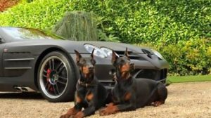 A1K9 Protection Dogs Protecting Car