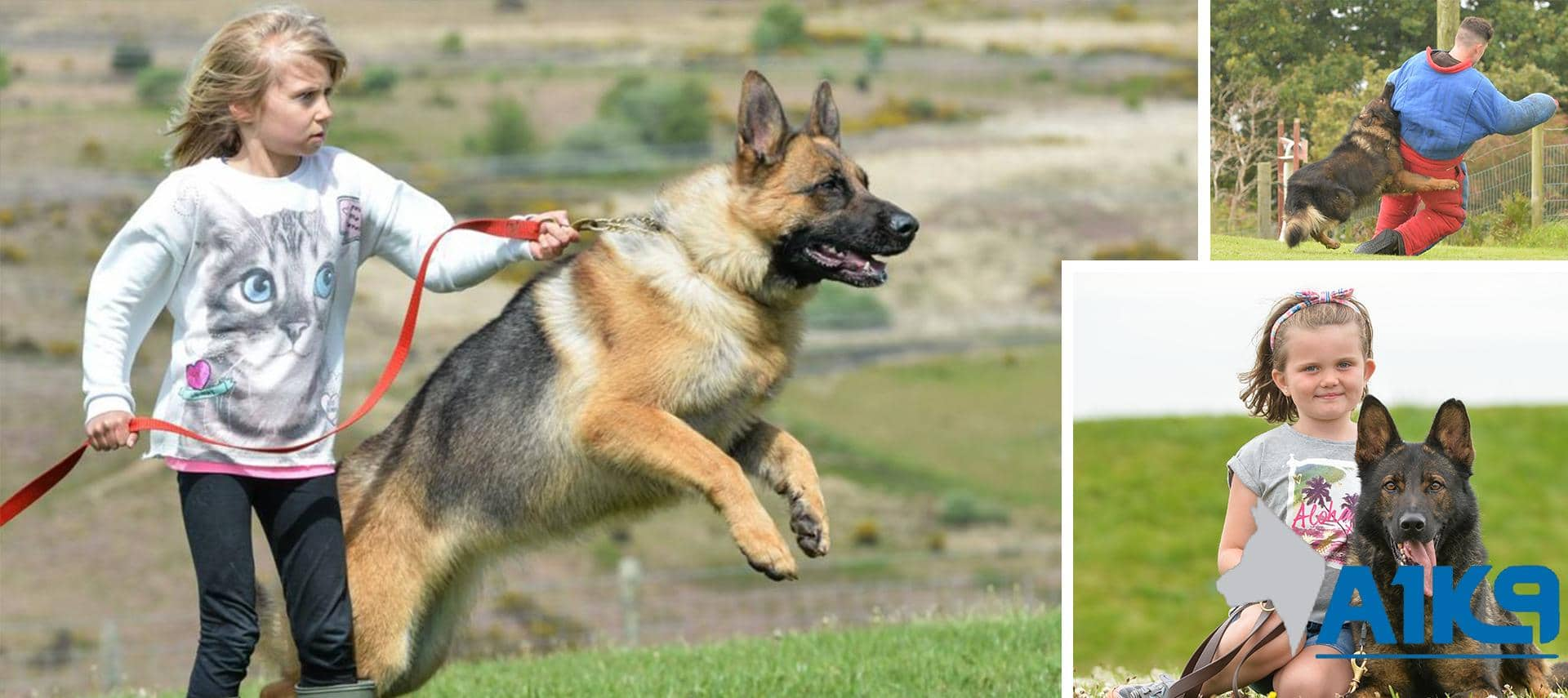 Family Protection Dogs A1K9