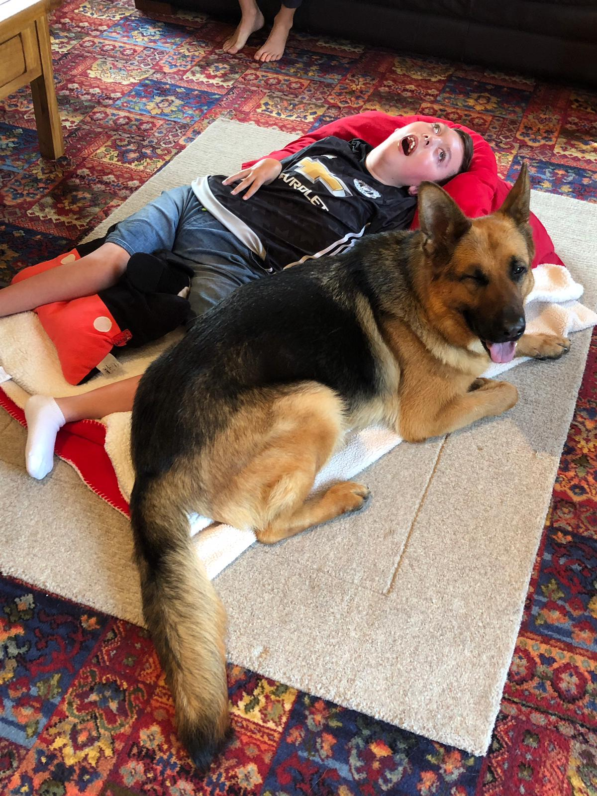A1K9 personal protection dog Honey Lying down