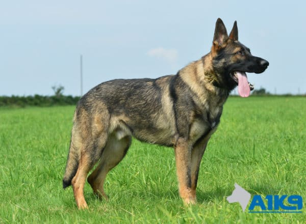 A1K9-Family Protection Dog Bax Stand