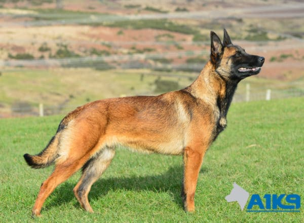 A1K9 Family Protection Dog DJ Stand